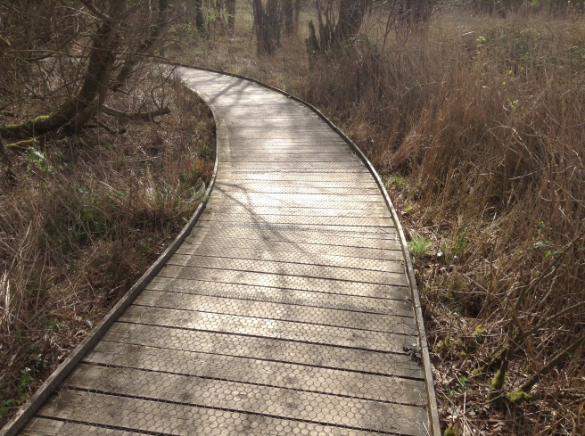 The boardwalk at Sculthorpe Moor