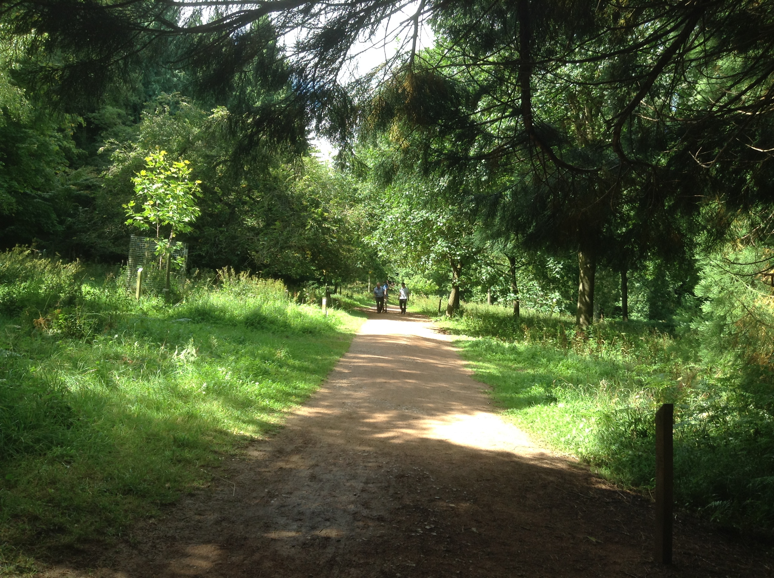 Queenswood Country Park and Arboretum, Herefordshire
