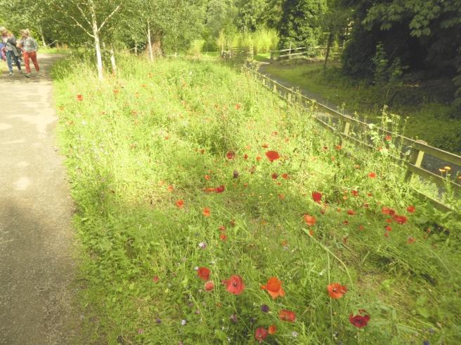 Wild flowers, Alnwick Garden