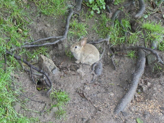 Lots of cute bunnies live near Fox Cover!