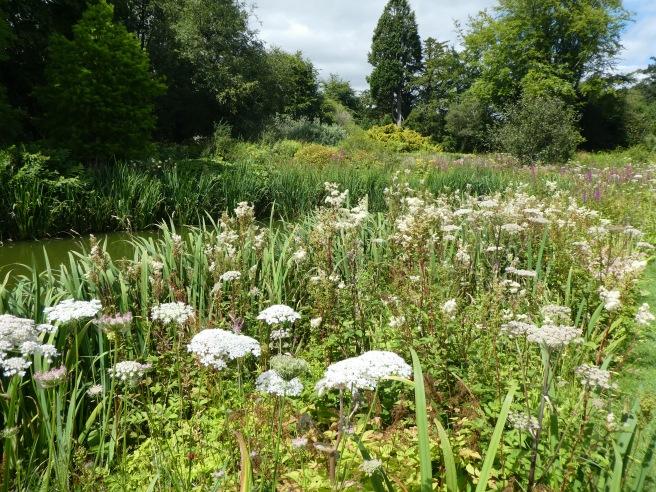 Bog Garden, Howick Hall