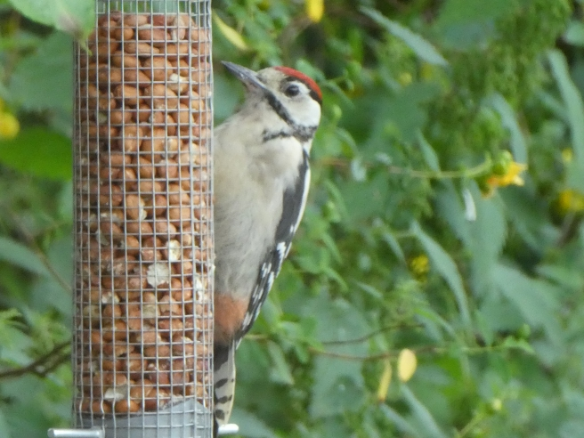 Woodpecker, Doxford Cottages